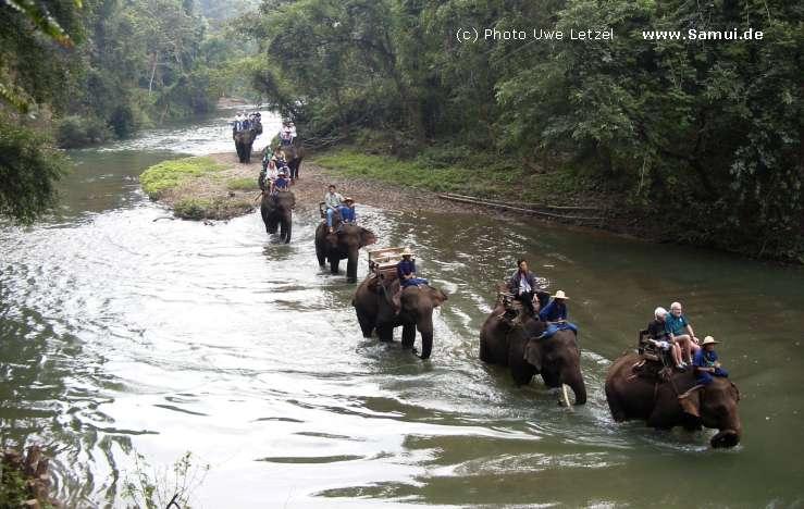 Foto: Chiang Mai Elefant Trekking (North Thailand)