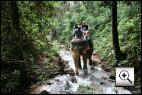 Elefant Trekking  (Insel Koh Chang)